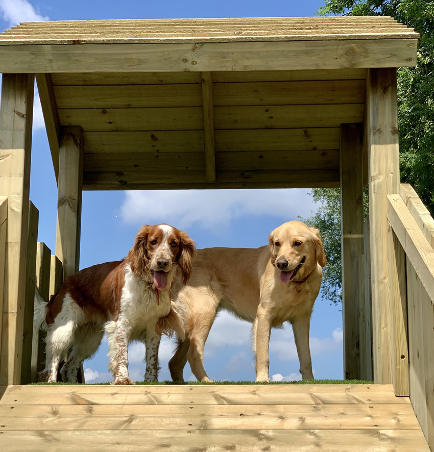 Dogs enjoying the wooden play equipment